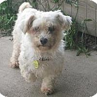 Adopt A Pet :: Olivia - Prole, IA