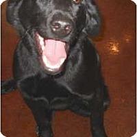Adopt A Pet :: Hayward - PENDING! - kennebunkport, ME