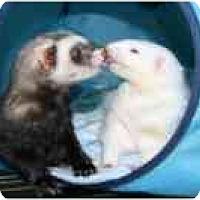 Adopt A Pet :: Napster - Columbia, MD