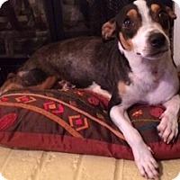 Adopt A Pet :: Brenna - Marietta, GA