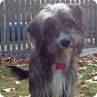 Adopt A Pet :: Tucker - E. Greenwhich, RI