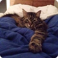 Adopt A Pet :: Rowley - Vancouver, BC