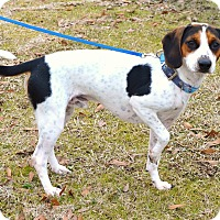 Adopt A Pet :: *Lucky - PENDING - Westport, CT