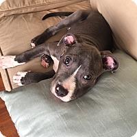 Adopt A Pet :: Trooper - Los Angeles, CA