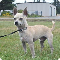 Adopt A Pet :: Hero - Tumwater, WA