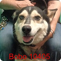 Adopt A Pet :: Bobo - baltimore, MD