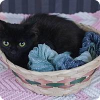 Adopt A Pet :: Yui - Muskegon, MI