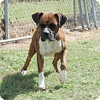 Adopt A Pet :: A.J. - Brentwood, TN