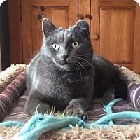Adopt A Pet :: Kiki - Roseville, MN