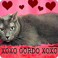 Adopt A Pet :: *GORDO - Sugar Land, TX