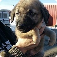 Adopt A Pet :: Patty - Ogden, UT