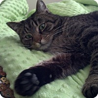 Adopt A Pet :: Story - Plainville, MA