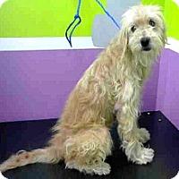 Adopt A Pet :: Cash-ADOPTION PENDING - Boulder, CO