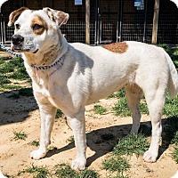 Pointer Mix Dog for adoption in Jasper, Alabama - F-174