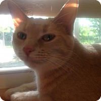 Adopt A Pet :: Eureka - Centerville, GA