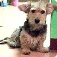 Adopt A Pet :: Yogi - Boulder, CO