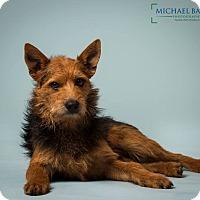 Adopt A Pet :: Bruce - Gentle boy - Woonsocket, RI