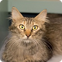 Adopt A Pet :: Momo - Fountain Hills, AZ
