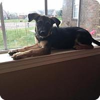 Adopt A Pet :: Zoey  PRECIOUS - Tunica, MS