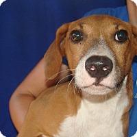 Adopt A Pet :: Dj - Oviedo, FL