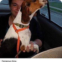 Adopt A Pet :: Gina - Saddle Brook, NJ