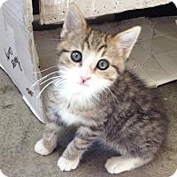 Adopt A Pet :: Daisy - Larned, KS
