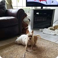 Adopt A Pet :: Kobi - Mesquite, TX