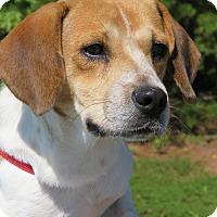 Adopt A Pet :: Willy - Richmond, VA