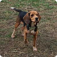 Adopt A Pet :: Joey - Dumfries, VA