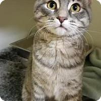 Adopt A Pet :: Hemlock - Lowell, MA