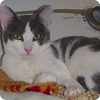 Adopt A Pet :: Bentley - Buhl, ID