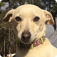 Adopt A Pet :: JACQUE (SRC#1777) in NC - Lenoir, NC