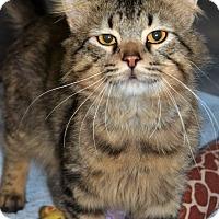 Adopt A Pet :: Milo - Michigan City, IN