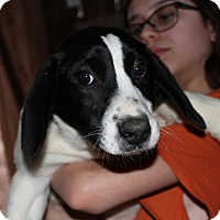 Adopt A Pet :: Al - Harmony, Glocester, RI