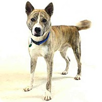 Adopt A Pet :: MARX - Sanford, FL