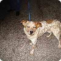 Adopt A Pet :: Harrison - Beaver, UT