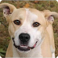 Adopt A Pet :: Chase - Chicago, IL