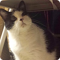 Adopt A Pet :: Bettie - Colmar, PA