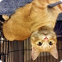 Adopt A Pet :: Tiki - Milwaukee, WI