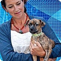 Adopt A Pet :: Charlotte - Cashiers, NC