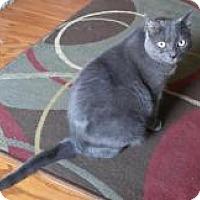 Adopt A Pet :: Sadie - Medford, NJ
