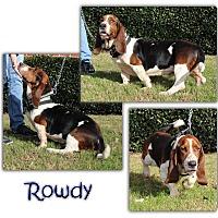 Adopt A Pet :: Rowdy - Marietta, GA