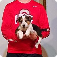 Adopt A Pet :: Oscar - Lakewood, OH