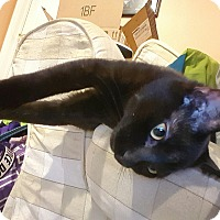 Adopt A Pet :: Mooch - Horsham, PA