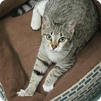 Adopt A Pet :: Pringle (foster care) - Philadelphia, PA