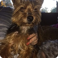 Adopt A Pet :: Rocko - N. Babylon, NY