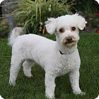 Adopt A Pet :: ZANDER - Newport Beach, CA