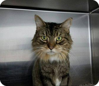 Cat Adoption Elyria Ohio
