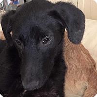 Adopt A Pet :: Bonnie - Denver, CO
