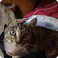 Adopt A Pet :: Rhyanna - Orinda, CA